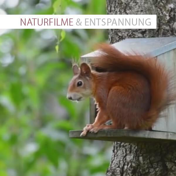 Naturfilme & Entspannung